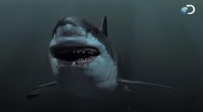 gambar hiu raksasa megalodon