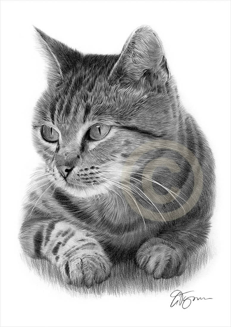 13-Cat-Gary-Tymon-Wildlife-and-Domestic-Animal-Pencil-Drawings-www-designstack-co