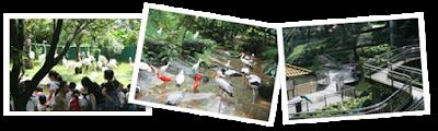 10 Tempat Menarik Di Kuala Lumpur,  Kidzania Kuala Lumpur,  Aquaria KLCC, Taman Burung Kuala Lumpur, Taman Rama Rama Kuala Lumpur, Zoo Negara Kuala Lumpur, Taman Tasik Titiwangsa, Tugu Negara Kuala Lumpur, Kuala Lumpur Upside Down House, Memorial Tun Abdul Razak,  Taman Wetland Putrajaya, Lokasi Tempat Menarik Di Kuala Lumpur