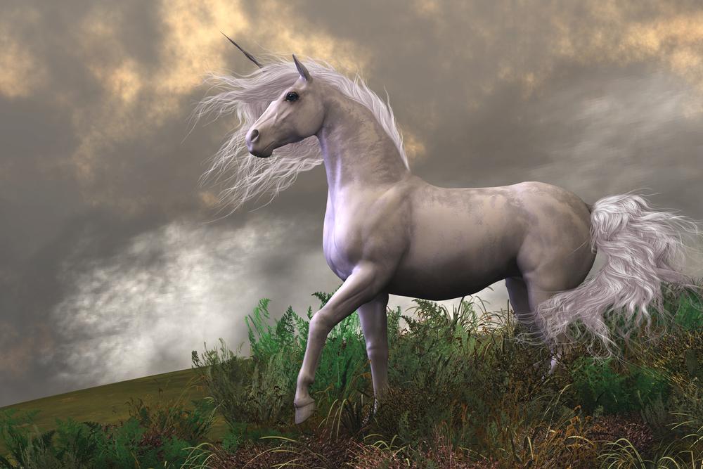 970+ Foto Penampakan Unicorn Asli HD Terbaru