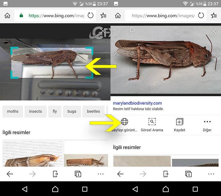 Bing Görsel Arama özelliği -www.ceofix.com
