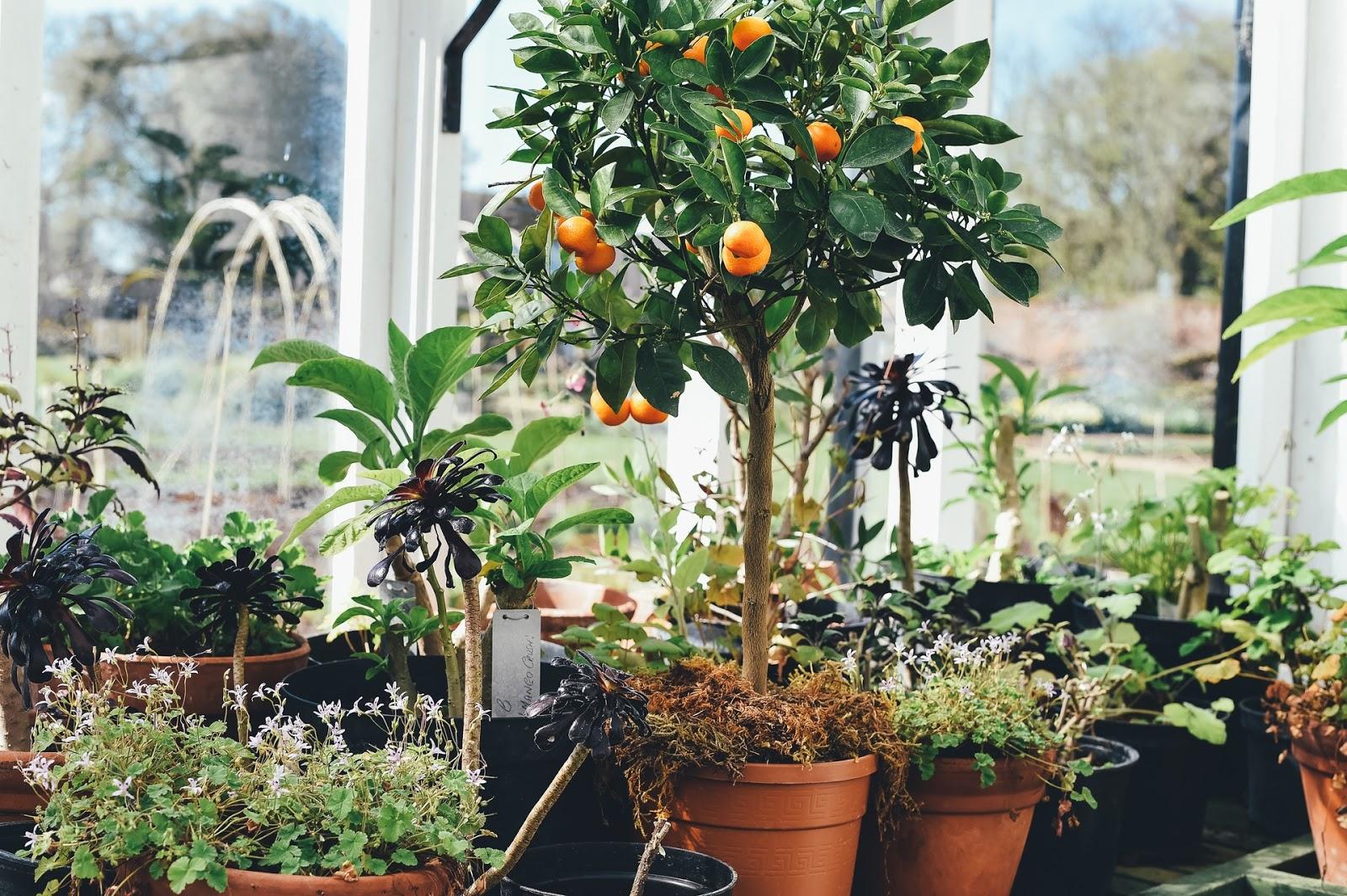 5 Rboles Frutales Para Plantar En Macetas Amigos De La Jardiner A ~ Cuando Hay Que Abonar Los Arboles Frutales