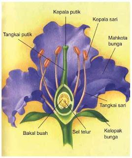Bagian-bagian bunga pada tumbuhan