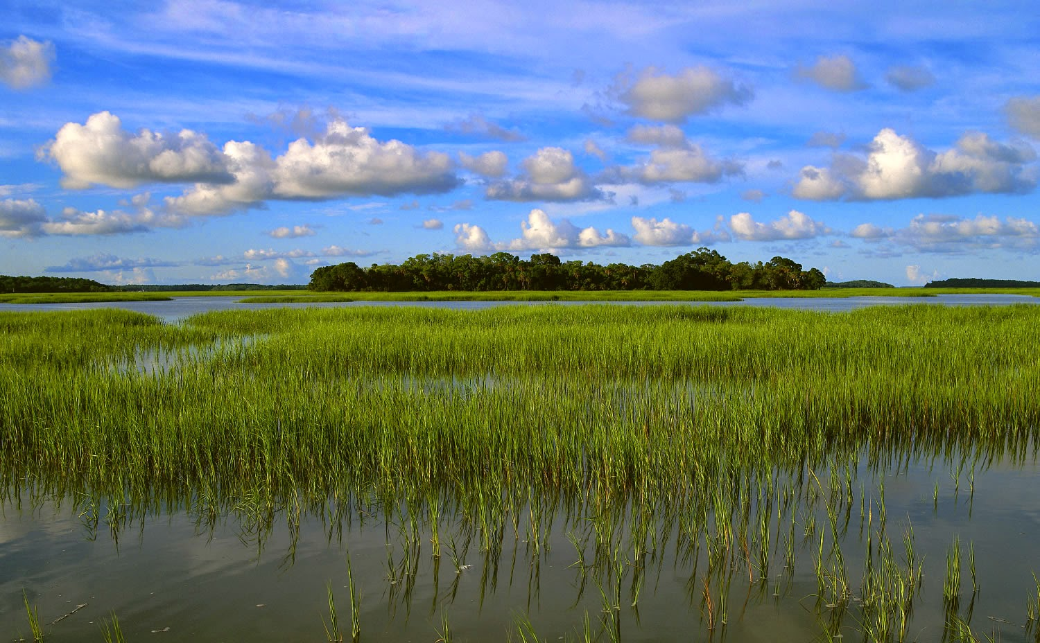 Coastal wetlands at Pinckney Island National Wildlife Refuge