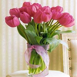 Jual Bunga Tulip - Toko Bunga Online