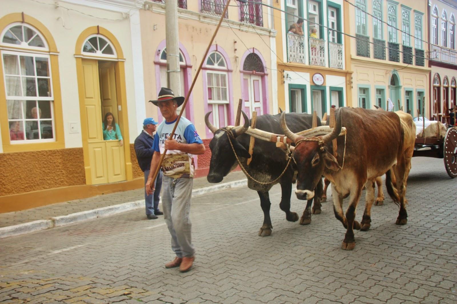 Desfile de boi, na Festa da Comida Caipira em São Luiz do Paraitinga