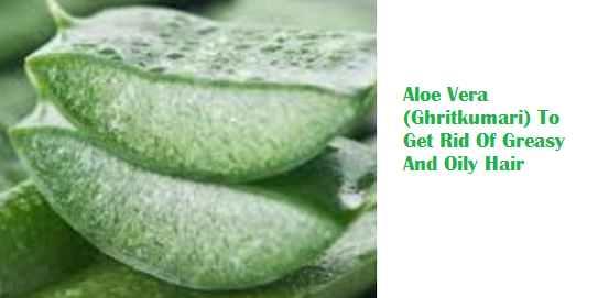 Aloe Vera (Ghritkumari) To Get Rid Of Greasy And Oily Hair
