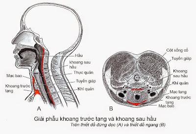 giải phẫu khoang trước tạng