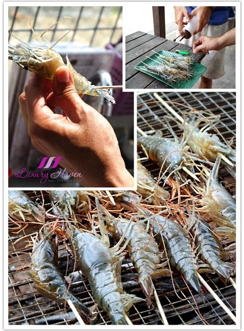 dkranji countryside prawning fresh water blue claw prawns