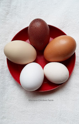 Fresh chicken eggs in several colors
