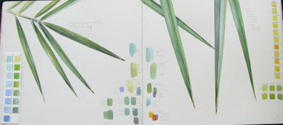 Sketchbook study of date palm leaf with colour notes by Shevaun Doherty