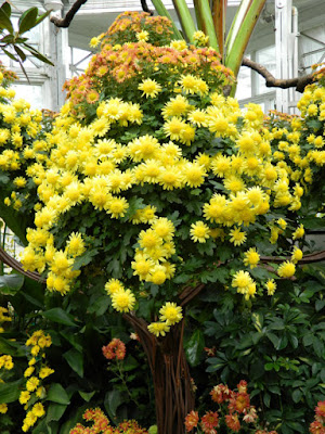Chrysanthemum tree display detail at Allan Gardens Conservatory 2015 Chrysanthemum Show by garden muses-not another Toronto gardening blog