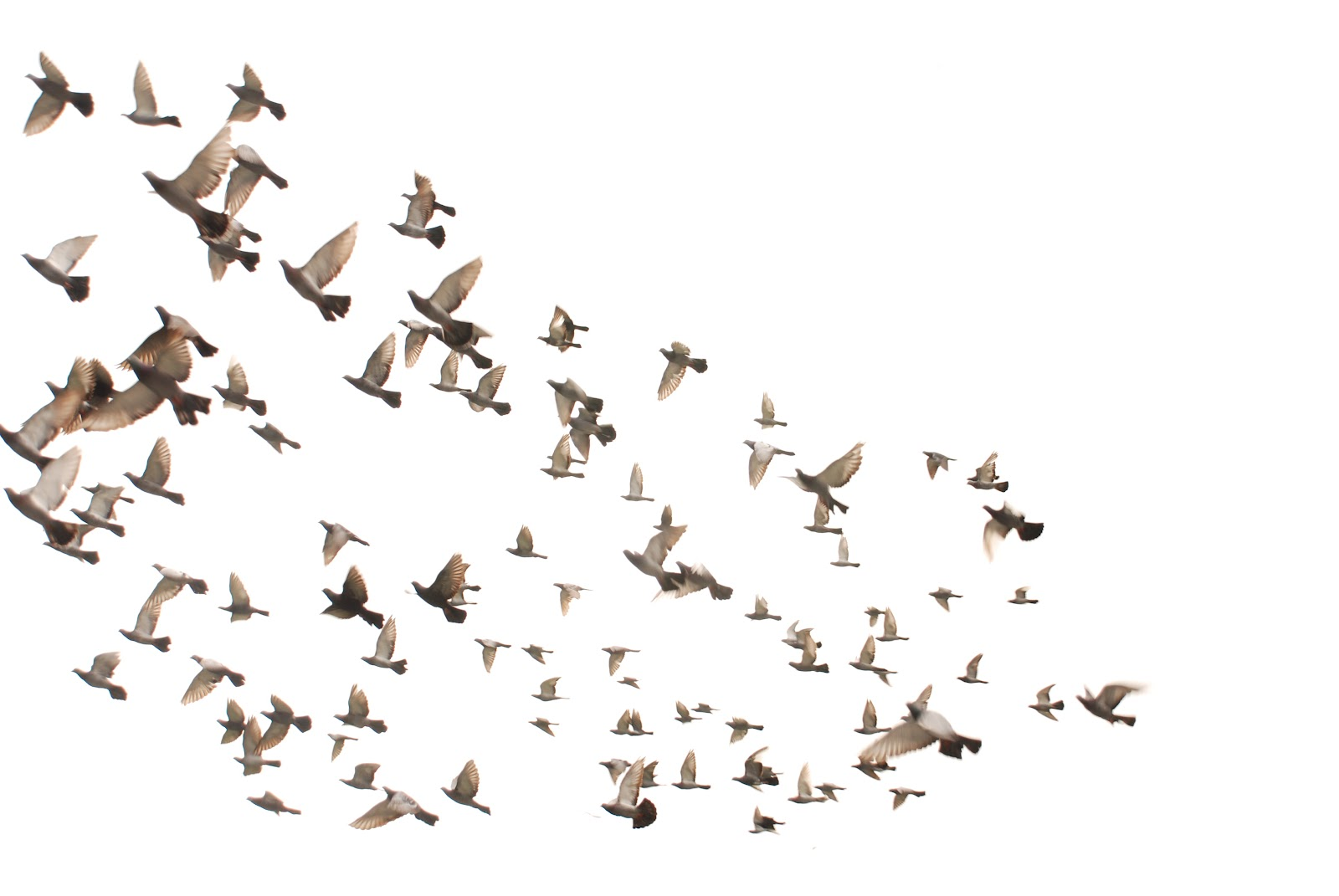 Villa Manila: Birds flying high, you know how I feel..... - photo#5