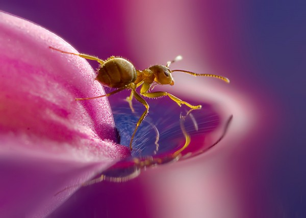Mind Blowing Insect Life Photography