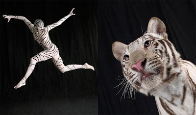 Body paint Tigre Tiger pintar cuerpo