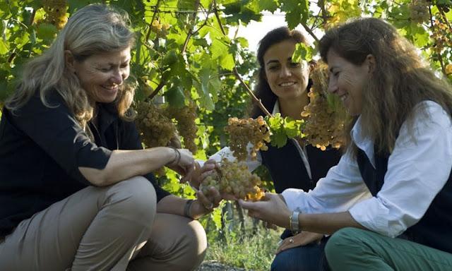 Mulheres em plantação de uva para produção de vinho