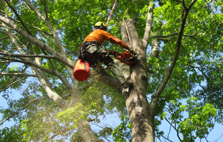 How to find an Efficient Tree Service