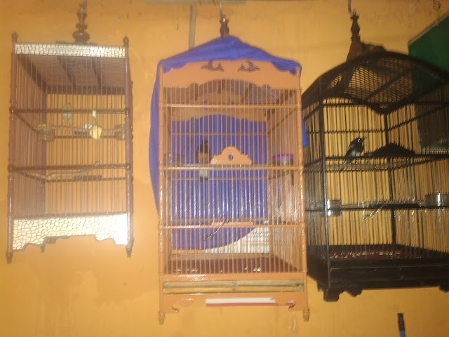 Pada dasarnya semua jenis burung sudah mempunyai materi  Cara Memaster Burung Yang Benar