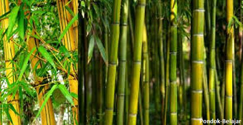 Belajar Philosofi dari Kehidupan Bambu
