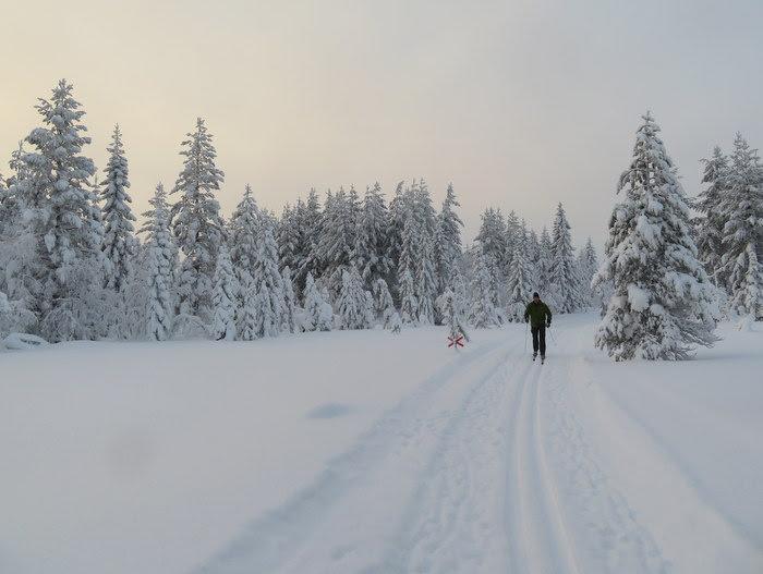Nätra Fjällskog