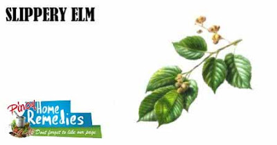 Home Remedies For Heartburn: Slippery Elm