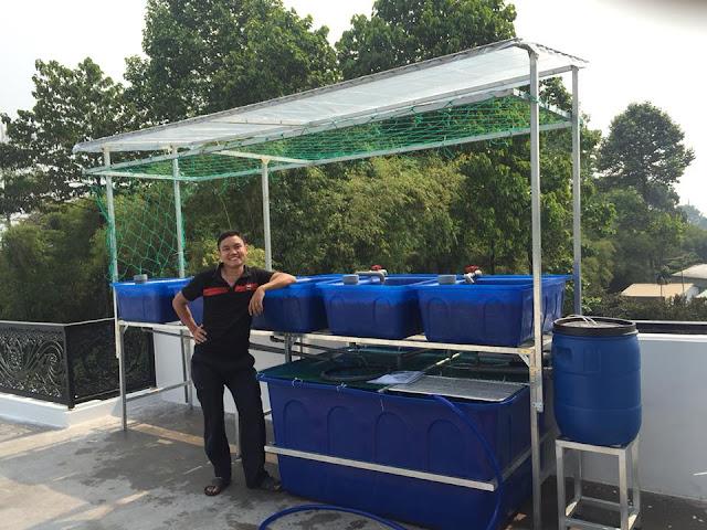 trồng rau nuôi cá