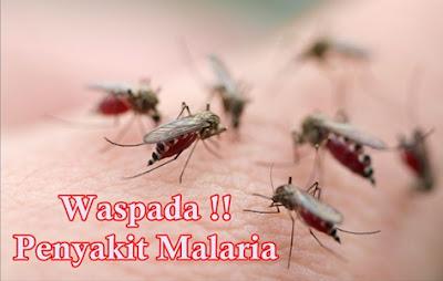 Cara Mengobati Malaria Secara Tradisional