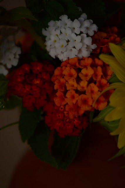 monday vase meme, sunflowers, solar eclipse, lantana, denver red, amy myers, photography, small sunny garden, desert garden