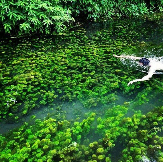 Sumber Sirah, Spot Snorkeling Air Tawar Seru Di Malang
