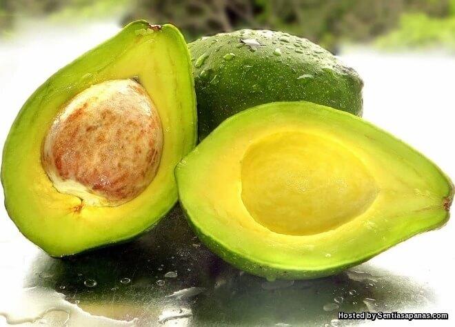 6 Khasiat Daun Avocado Untuk Kesihatan