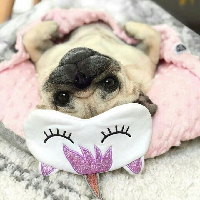 Animais famosos do instagram que vão pôr um sorriso na sua cara
