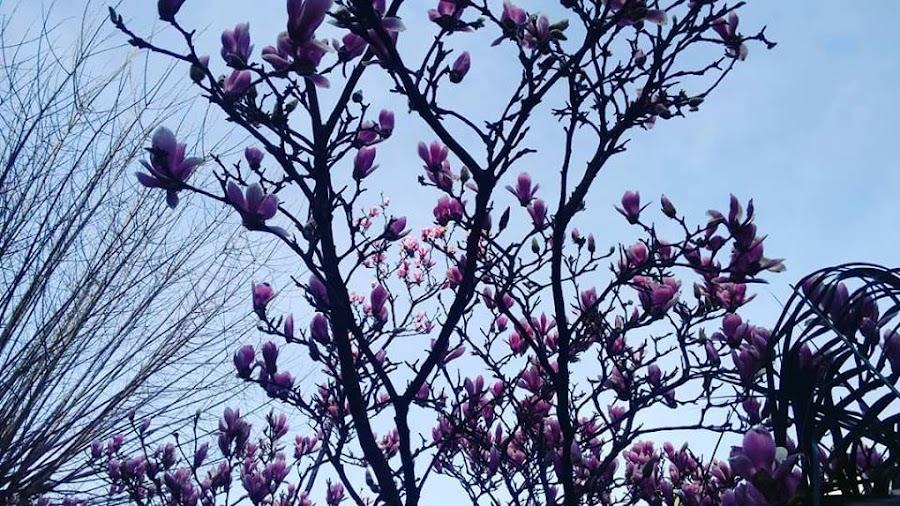 flor-febrero