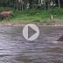 Ελέφαντας βουτάει με αυτοθυσία στο νερό για να σώσει άνδρα από «πνιγμό»  (Βίντεο)
