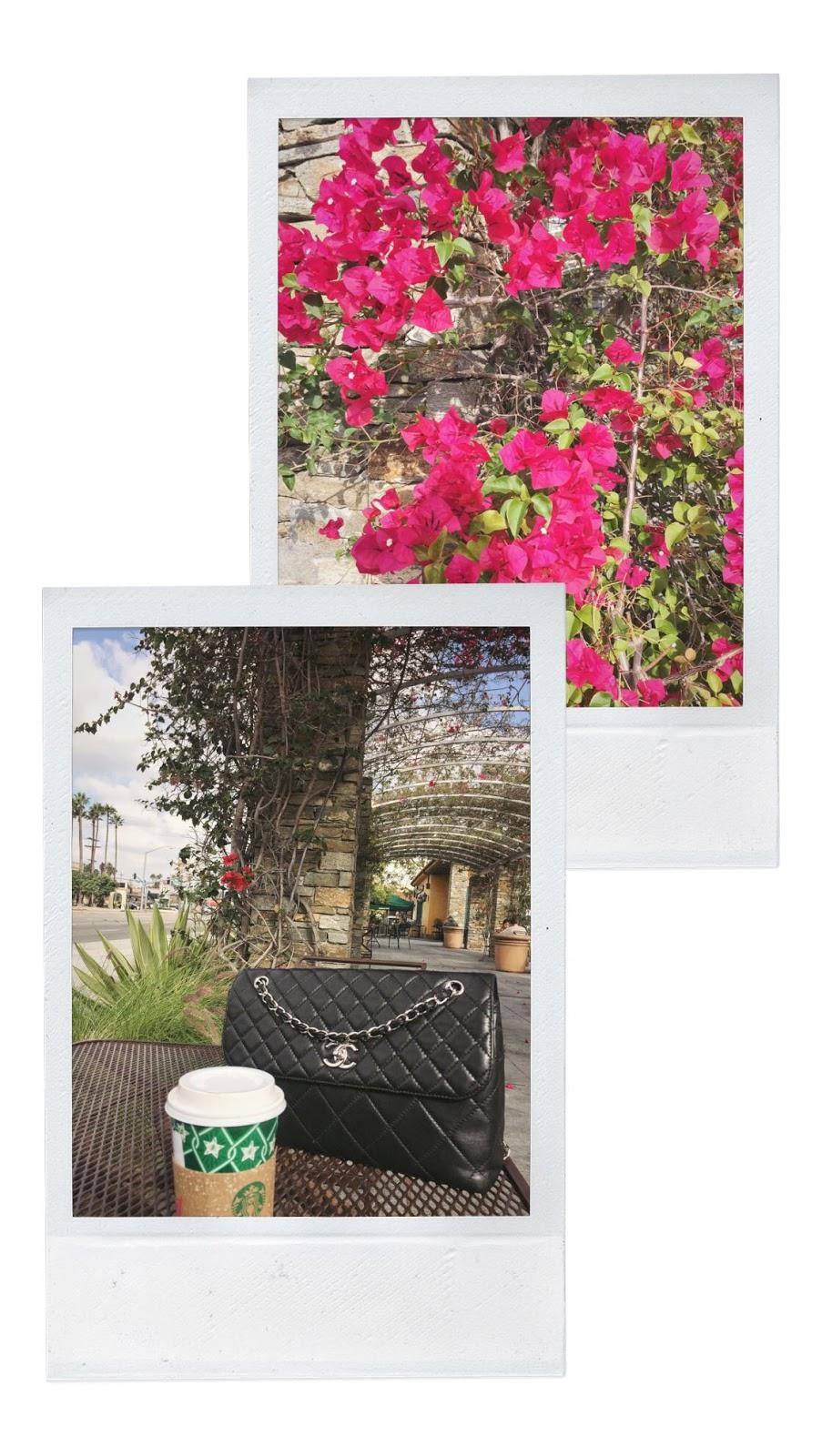 Los Angeles travel diary vancouver blogger aleesha harris travel style palm trees