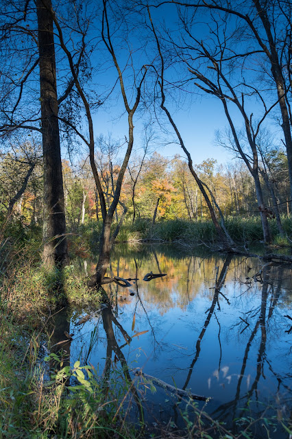 Beaver Pond at Tyler State Park
