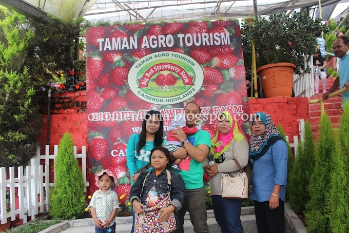 Bercuti di Cameron Highlands : Menikmati Ice Cream Strawberry Waffle di Taman Agro Tourism