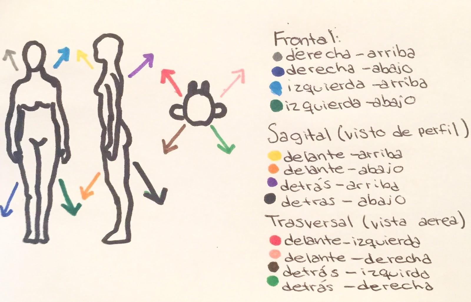 Qué es la Kinesfera? Parte 1 (con esquemas) | Amante de la Danza