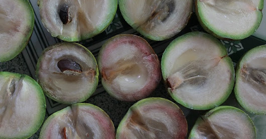 Star Apple for Bone Health and Diabetes Prevention