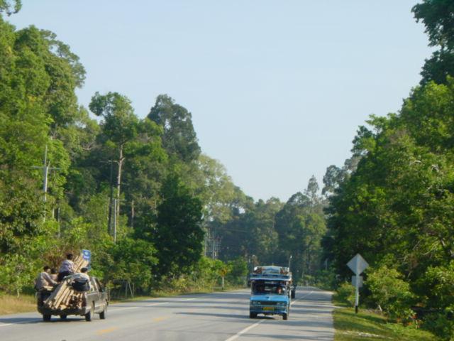 Quieter roads along the jungle path
