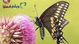 صور فراشات, اجمل الصور عن الفراشات, فراشات ملونة جميلة