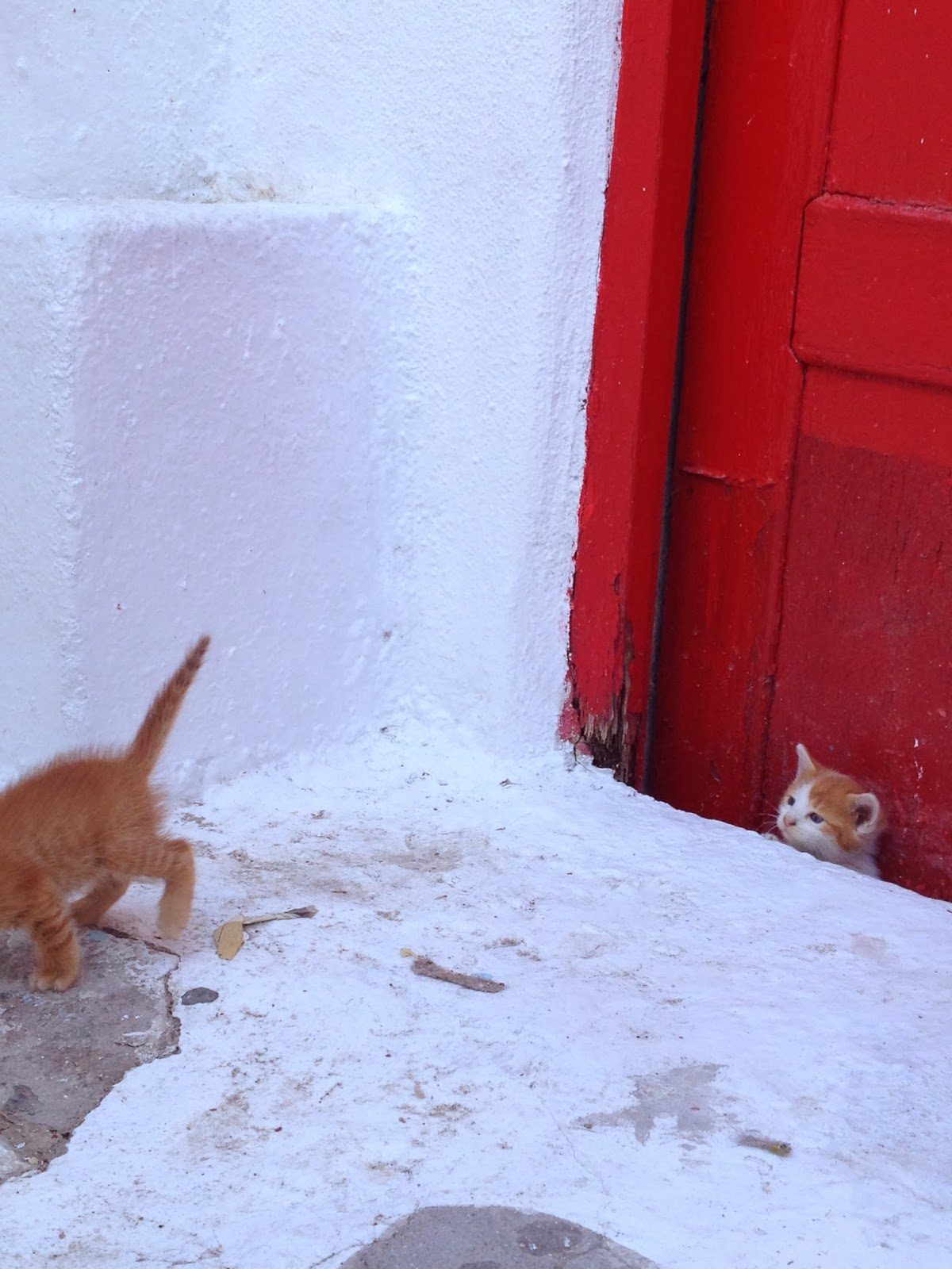 Mykonos - First photo opp was of these cute kittens near our hotel