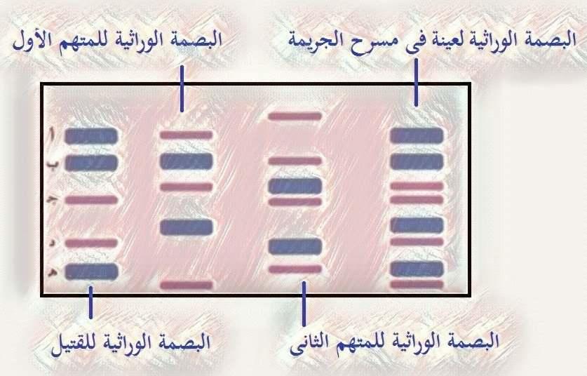 فك شفرة الجينوم البشرى GENOME   -  الحمض النووى DNA  - البصمة الوراثية - أحياء الثانوية العامة – مدونة أحمد النادى