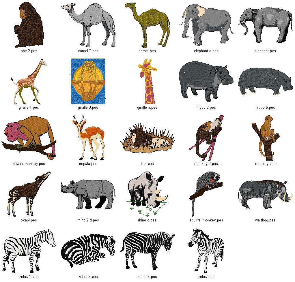 Related Keywords & Suggestions for names of wild animals