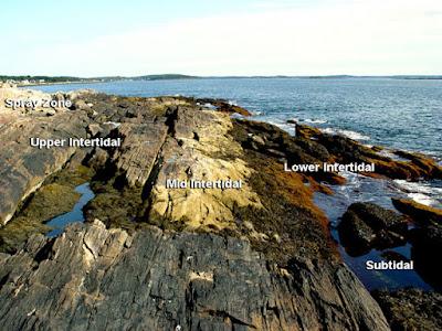 Zona Laut Intertidal, Pelagis, Bentos dan Abisal