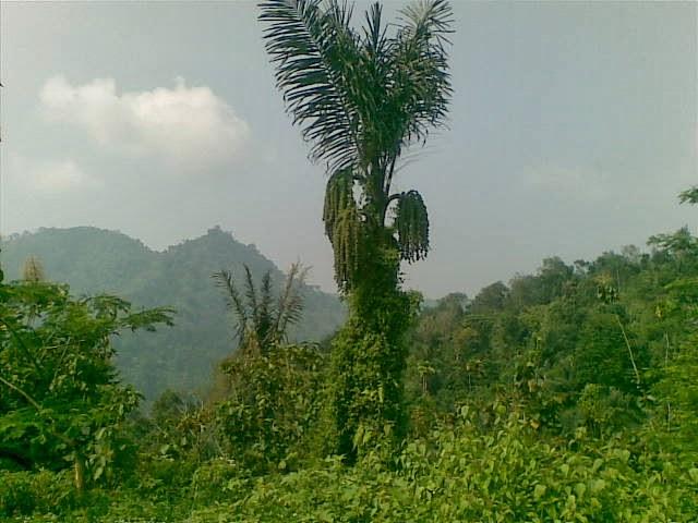 Foto(5083) Jual Tanah | Tanah Di jual, luas 4,25 ha kebun jual tanah di puncak