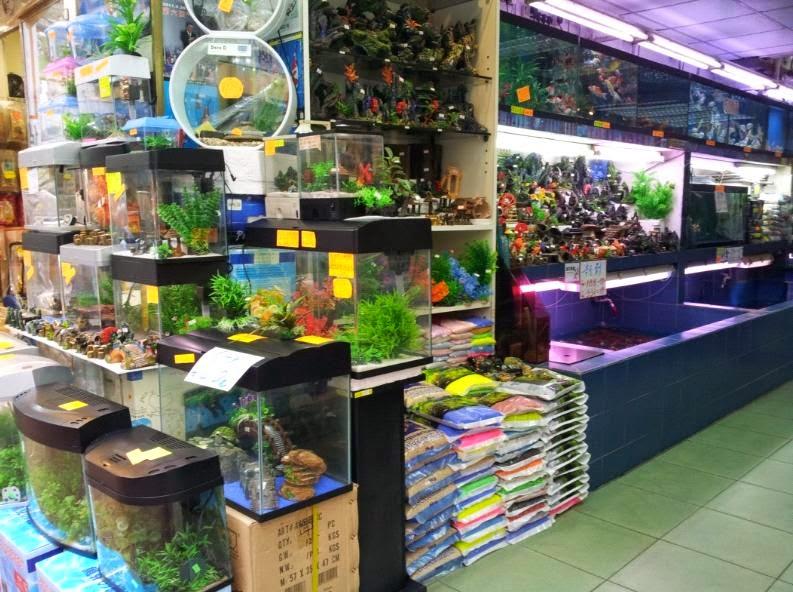 SPD4459 東張西望反轉油尖旺 Yau Tsim Mong x PDF: SPD4459 - [旺角景點] 第二十三站 – 金魚街 Goldfish Market