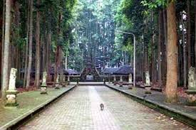 All about bali Sangeh nature parks
