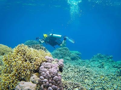 Scuba Diving in Parigi Moutong Sulawesi Tengah