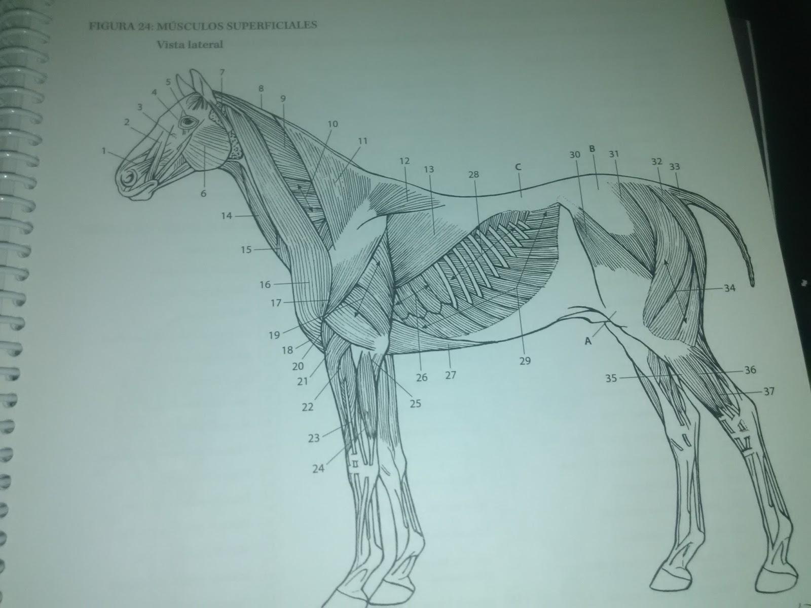 Excepcional Libre De Anatomía Imprimible Para Colorear Galería ...