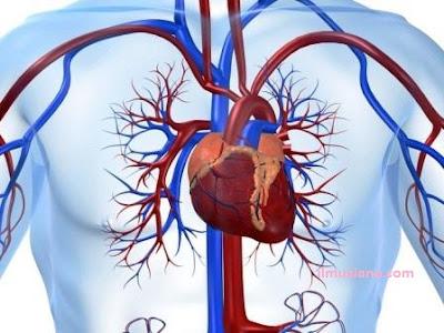 penyakit jantung manfaat susu kedelai